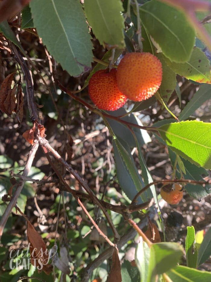 dwarf strawberry tree berries